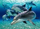 Predators Starve as Humans Plunder Oceans