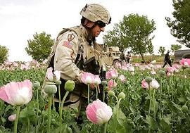 Opium and the CIA:  Can the US Triumph in the Drug-Addicted War in Afghanistan?