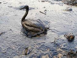 Barack Obama Flies to Louisiana as BP's Deepwater Horizon Oil Spill Spreads