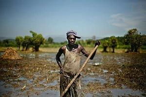 Haitian Farmers to Burn Donated Monsanto Seeds