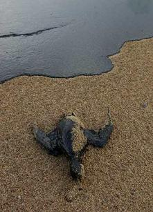 Deepwater Horizon: The Worst-Case Scenario