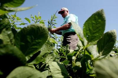 La catastrophe des OGM aux États-Unis, une leçon pour l'Union européenne