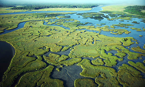 Big Oil Eyes Florida's Public Lands, Plans to Drill in the Everglades