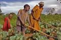 Uganda - Organic farming - mother and children farming