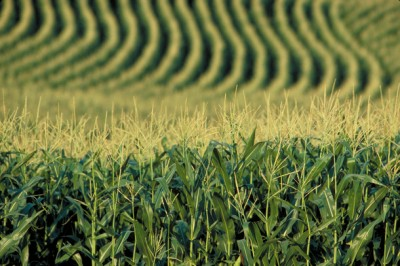 Monsanto en Ukraine