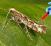 insect_diamondback_moth_vacc_gmo-263x164