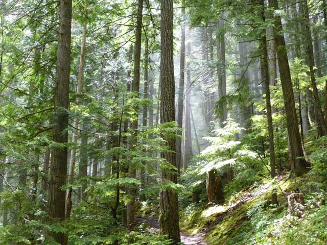Our Future: Nature, Children, and the Moral Imperative of Saving Trees