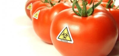 Research paper on genetically modified food