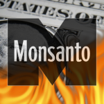 Monsanto Earnings Fall 34% as Farmers Reject GMO Crops