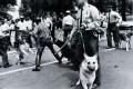 protes-blacks-police-dogs-60