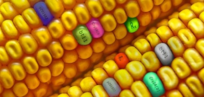 gmo_corn_dnas