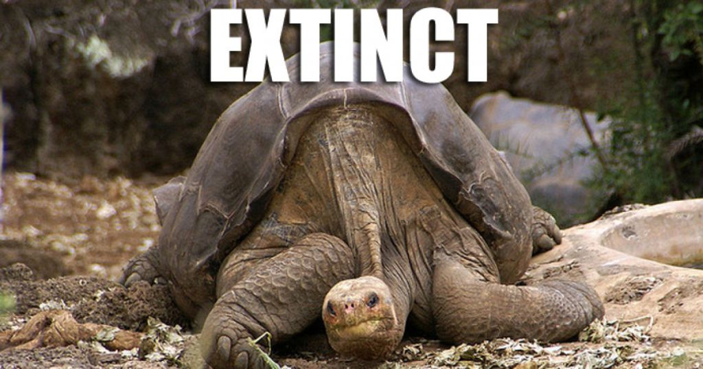Extinction of Animal Life on Planet Earth. Exceptional Loss of Biodiversity