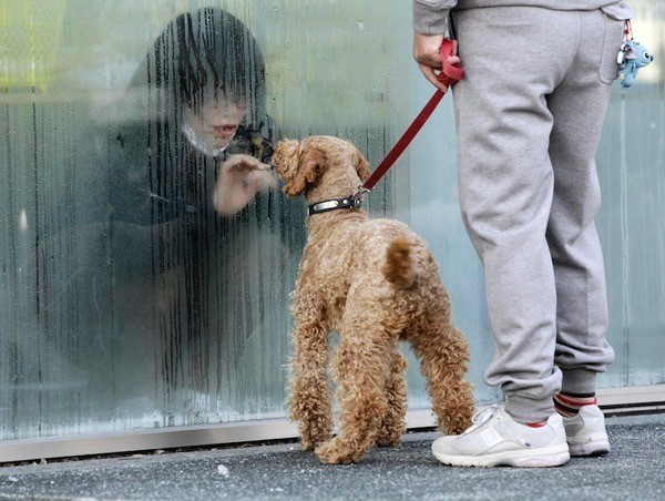 A girl who has been isolated at a makeshift facility to screen, cleanse and isolate people with high radiation levels, looks at her dog through a window in Nihonmatsu, Northern Japan, March 14, 2011 (Reuters/Yuriko Nakao - See more at: http://apjjf.org/2016/05/Jacobs.html#sthash.I7HbEWnE.dpuf