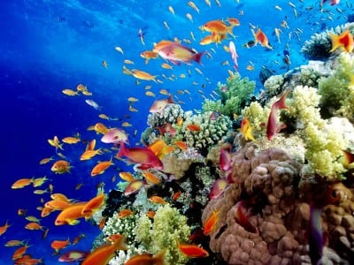 Image result for original The Great Barrier Reef (Australia)​ pics
