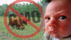 No-GMO-300x173