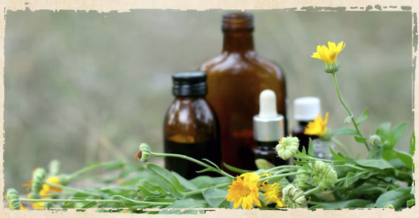 Naturopathy, The Medicinal Use of Herbs: Wikipedia's