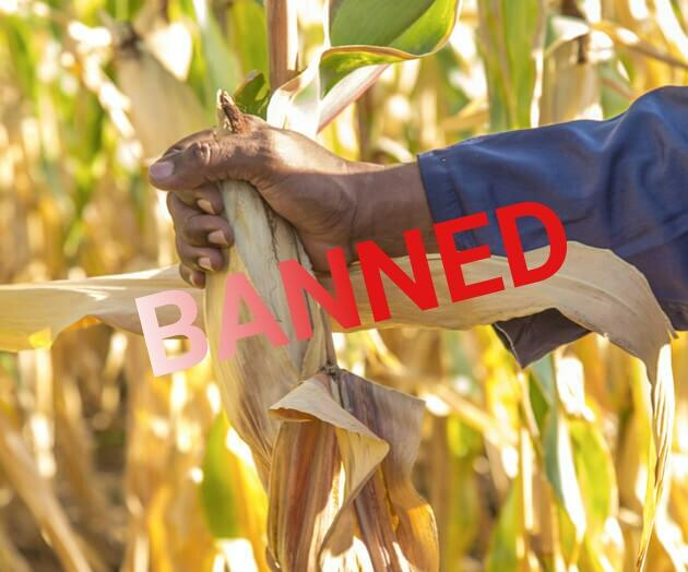 Tanzania Orders Destruction of Monsanto / Gates' GM Trials Due to Illegal Use for Pro-GM Propaganda