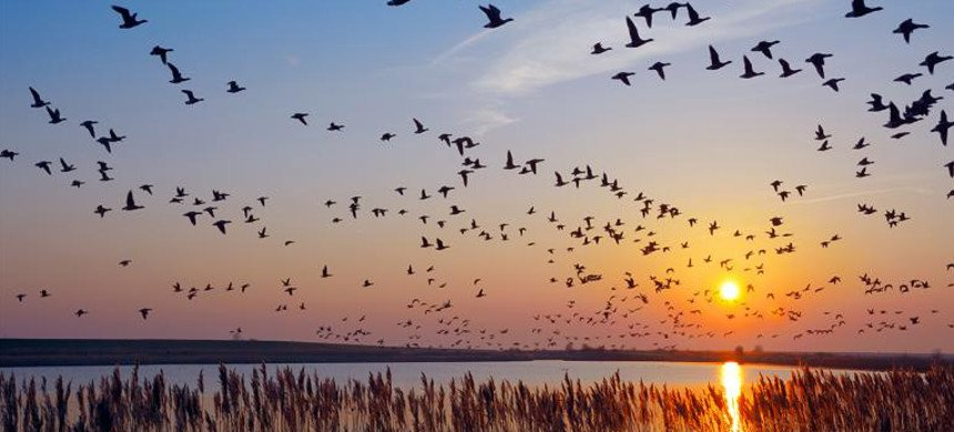 The Mass Murder of Migratory Birds across America - Global