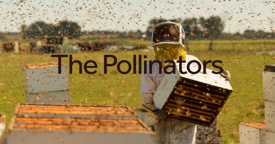 """What's Wrong with the Bees? Our New Film, """"The Pollinators,"""" Seeks an Answer"""