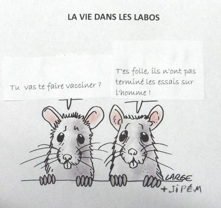 Ironie de la vie - Page 2 Souris-768x725